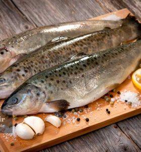 قیمت ماهی جنوب و ماهی پرورشی