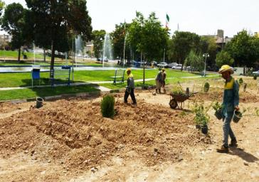 برگزاری جشنواره «گل سرخ» در عید فطر/۲۰ هزار درختچه گل سرخ از چهارراه تختی تا دروازه شیراز کاشته می شود
